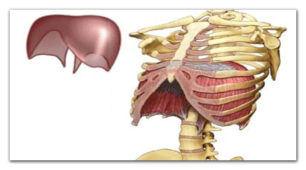 Treinamento da Musculatura Respiratória