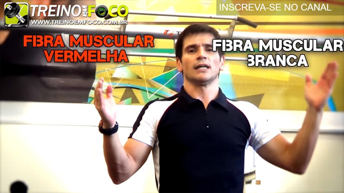 fibra_musccular_fibra_vermelha_fibra_branca_treino_em_foco_tipos_de_fibra_muscular