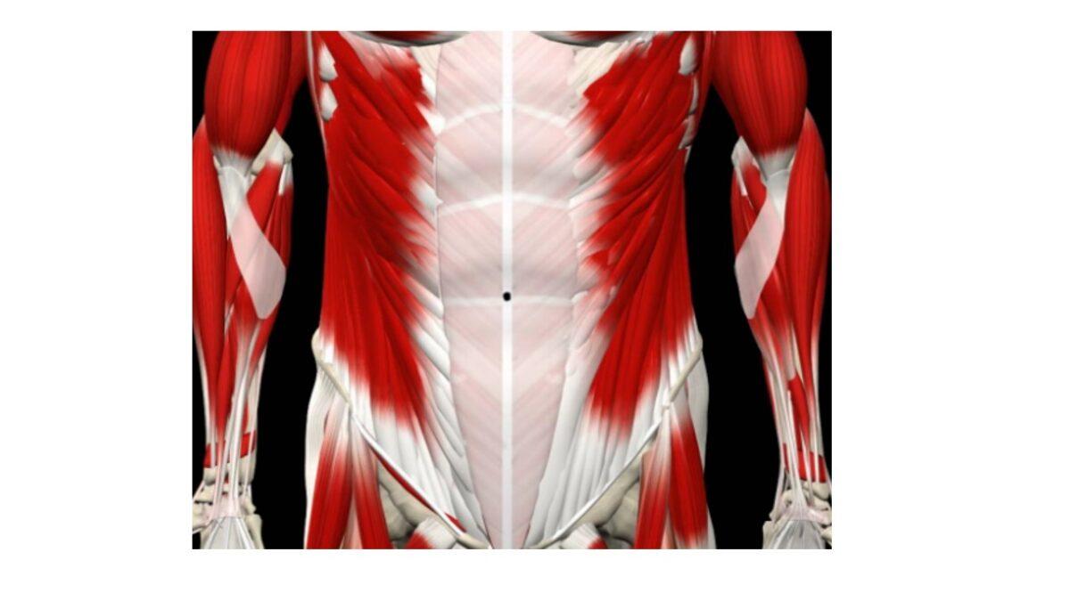 treino_em_foco_anatomia_parede_abdominal