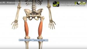vasto_intermédio_músculo_Quadríceps