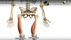 vasto_medial_lateral_músculo_quacríceps