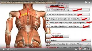 cinesiologia_aplicação_vetores_identificação