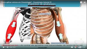 cinesiologia_contração_ventre_muscular