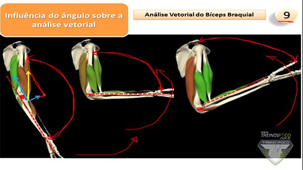 bíceps_180°_análise_vetorial