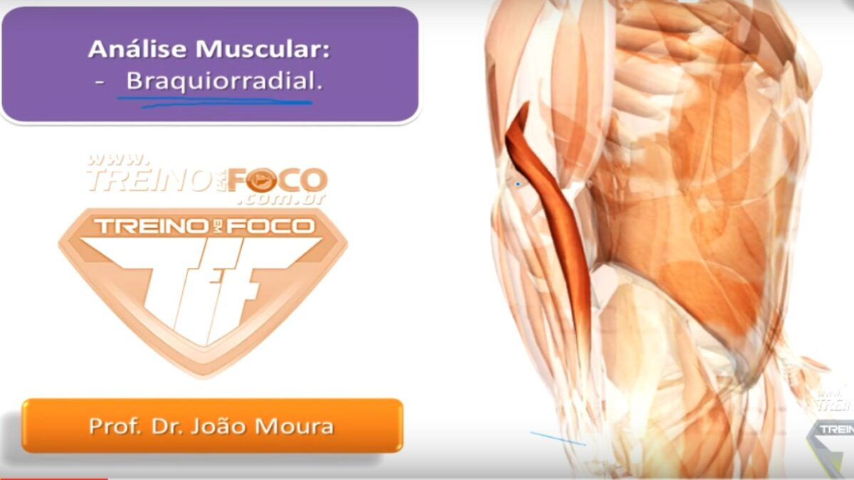 braquiorradial_músculo_anatomia