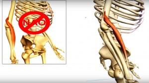 braquiorradial_músculo_cinesiologia_
