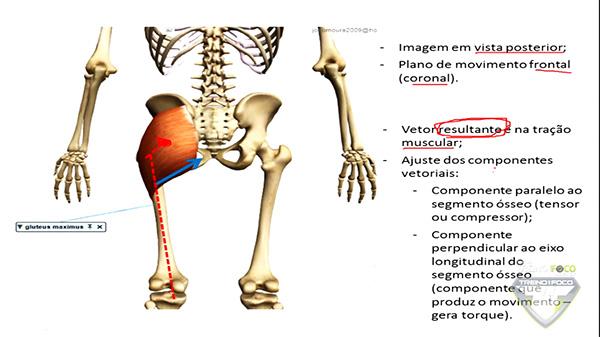 posterior_glúteo_máximo_vetor