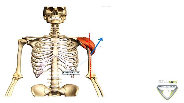 Quais os movimentos produzidos pelo músculo Deltoide? | Treino em ...