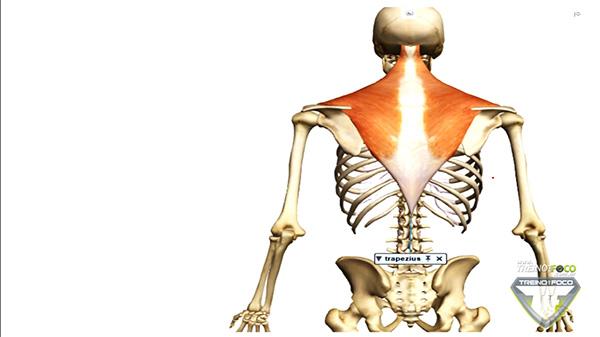 trape´zio_musculatura_posterior