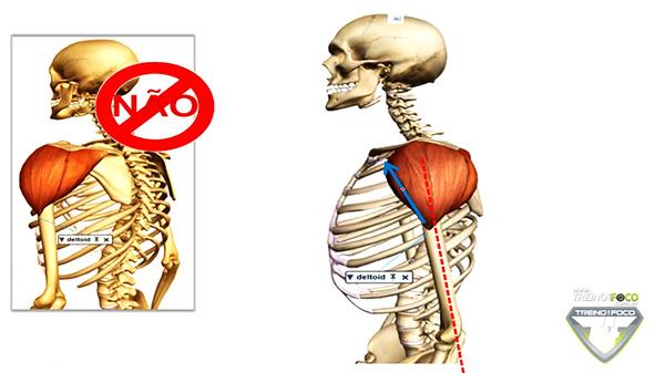 Perfecto Musculo Deltoide Friso - Anatomia del Cuerpo Humano ...