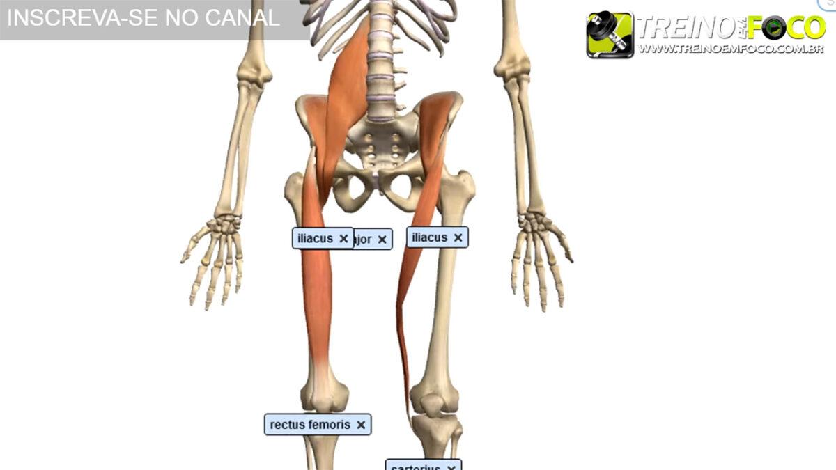 anteversão_pélvica_flexores_do_qaudril_treino_em_foco_desvio_postural