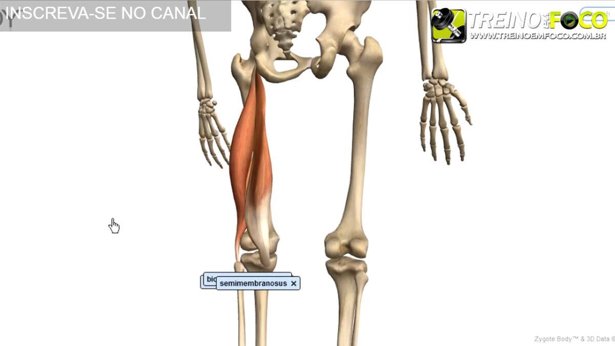 hipolordose_lombar_desvios_posturais_biofotogrametria_treino_em_foco