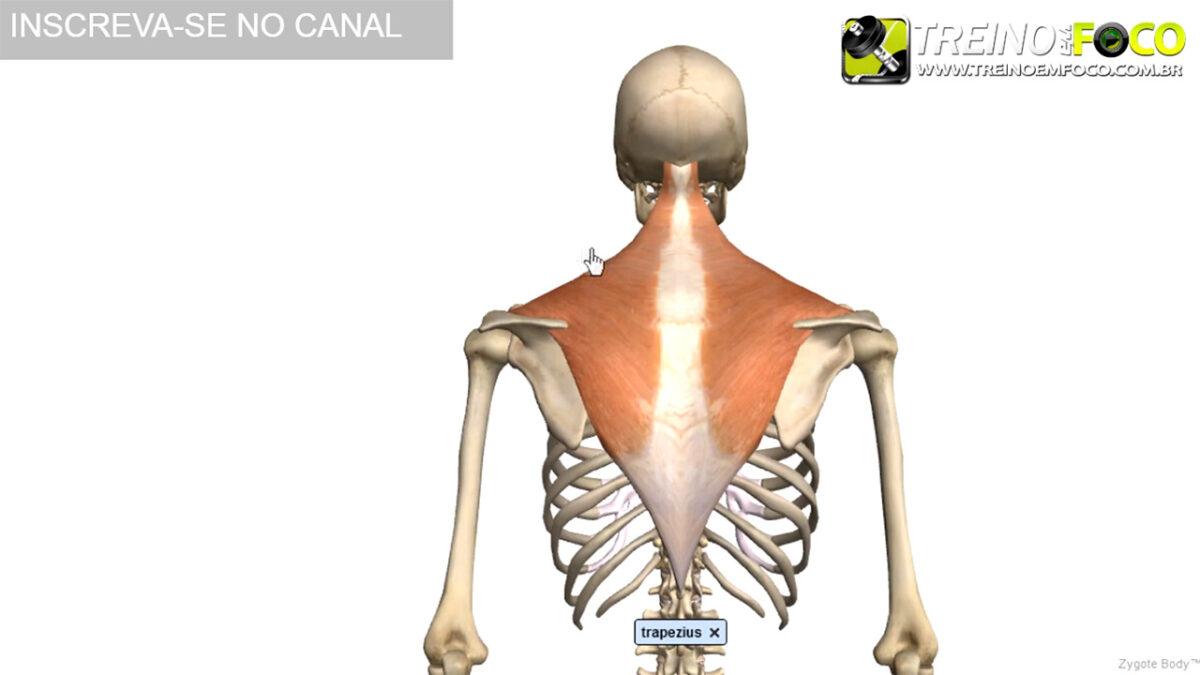 treino_em_foco_biofotogrametria_desvios_posturais_ombros_elevados.