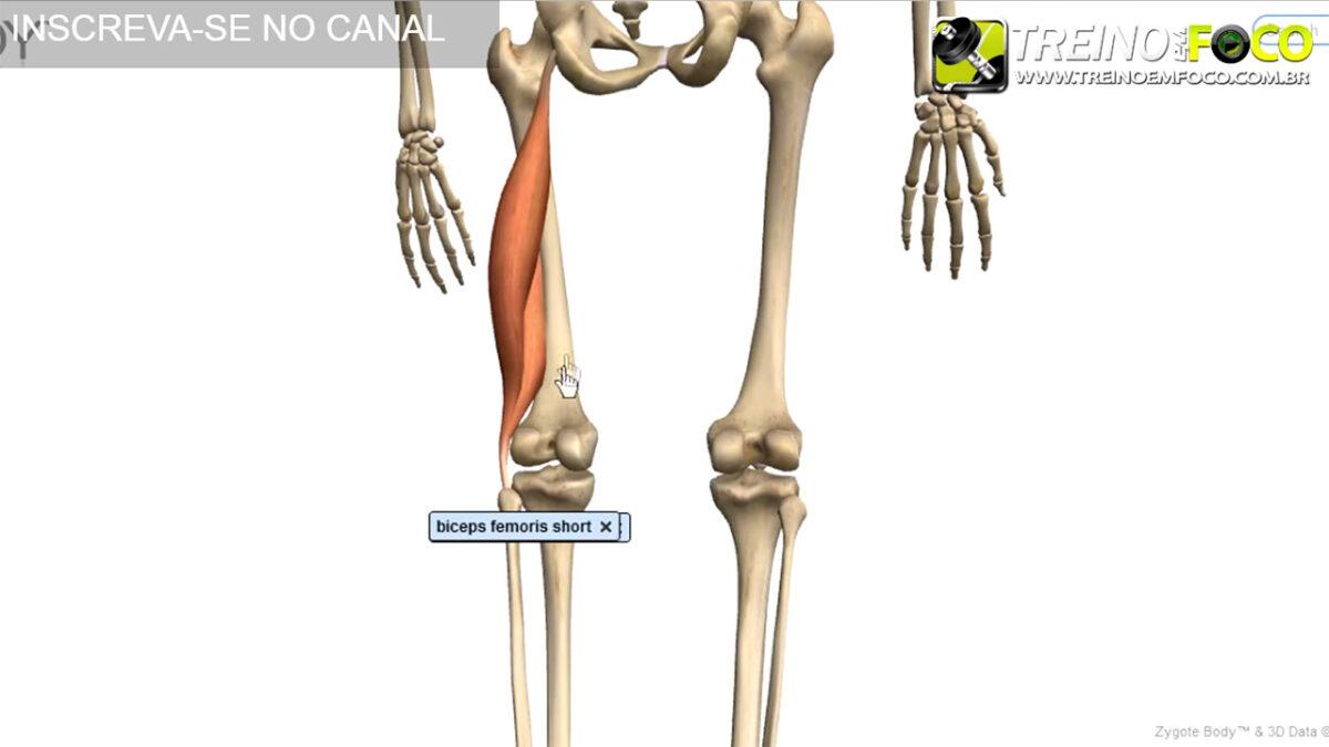 bíceps_femoral_cabeça_curta_treino_em_foco_alongamento_flexionamento