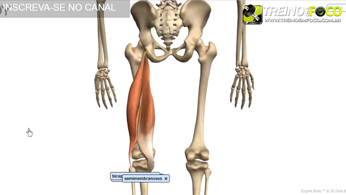 Alongamento para isquiotibiais posterior de coxa for Exercicio para interno de coxa