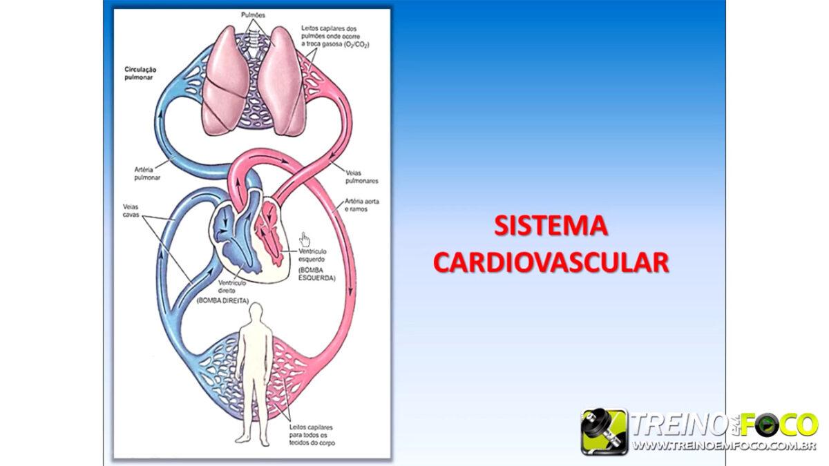 treino_em_foco_fisiologia_cardiovascular_coração_débito_cardíaco