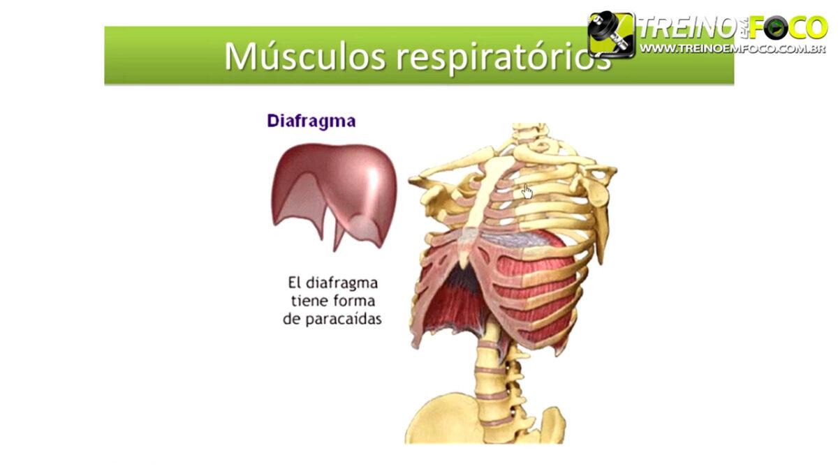 treino_em_foco_fisiologia_cardiovascular_respiratório_corrida_sistemas
