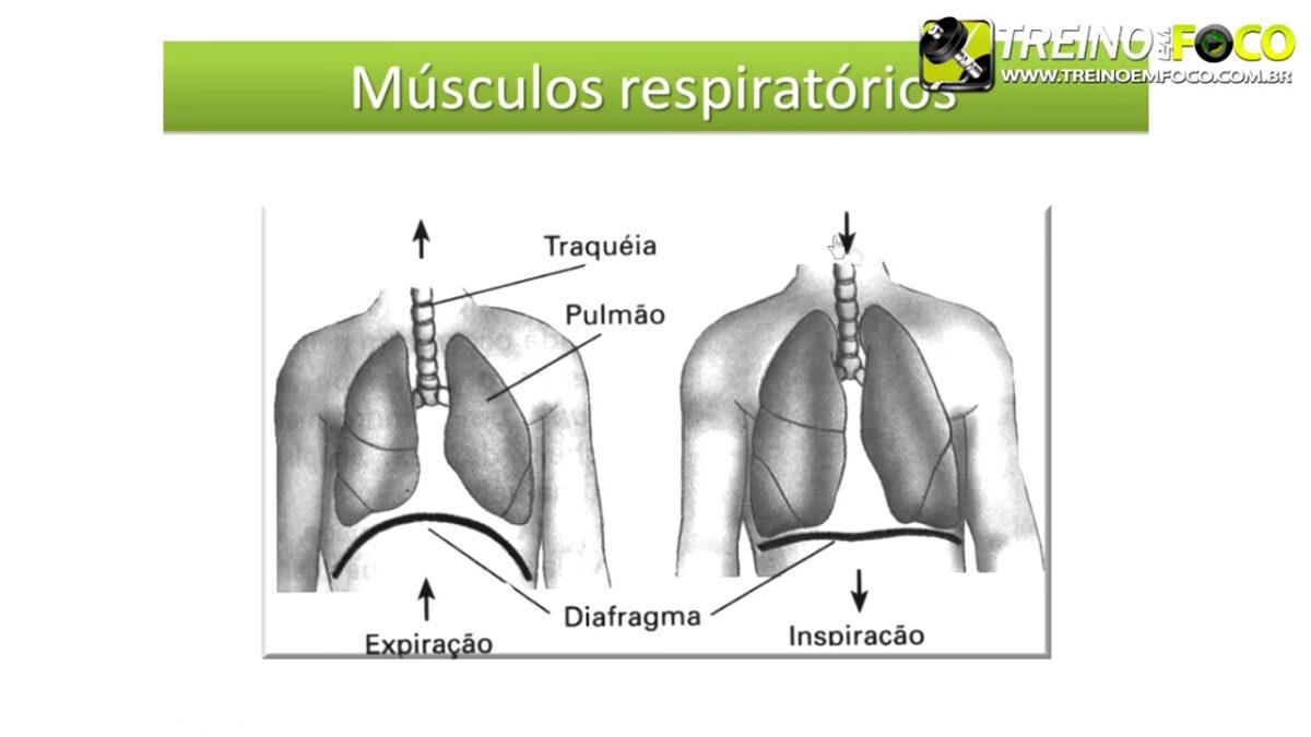 treino_em_foco_fisiologia_respiratória_cardiovascular_sistemas_corrida