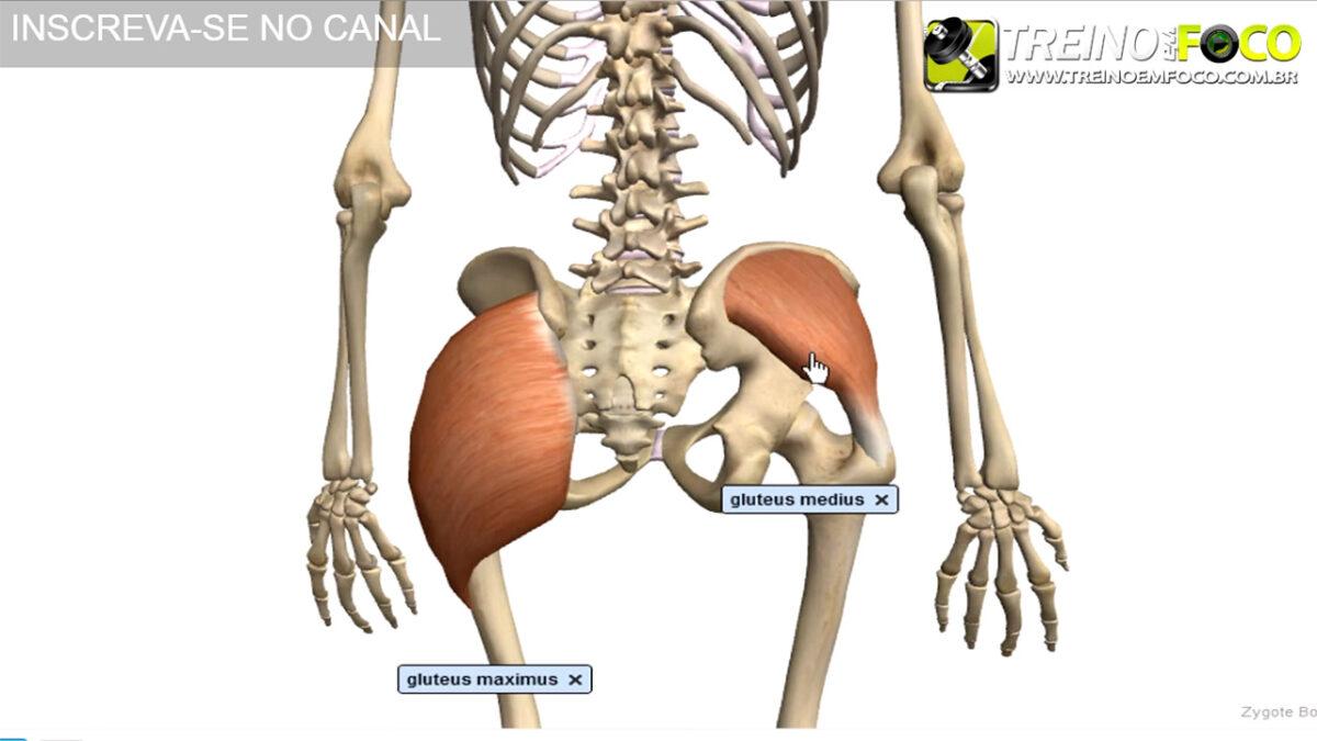 treino_em_foco_musculatura_do_glúteo_glúteo_médio_alongamento_flexionamento