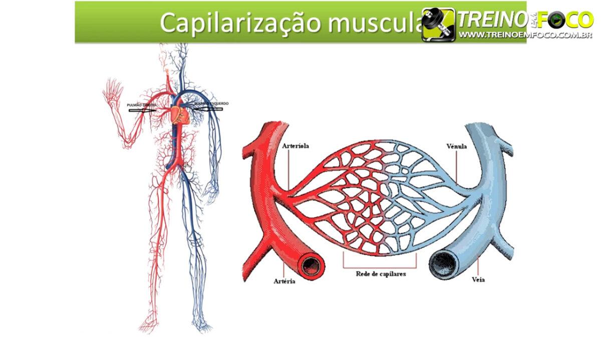 treino_em_foco_veia_cava_fisiologia_cardiovascular_respiratória