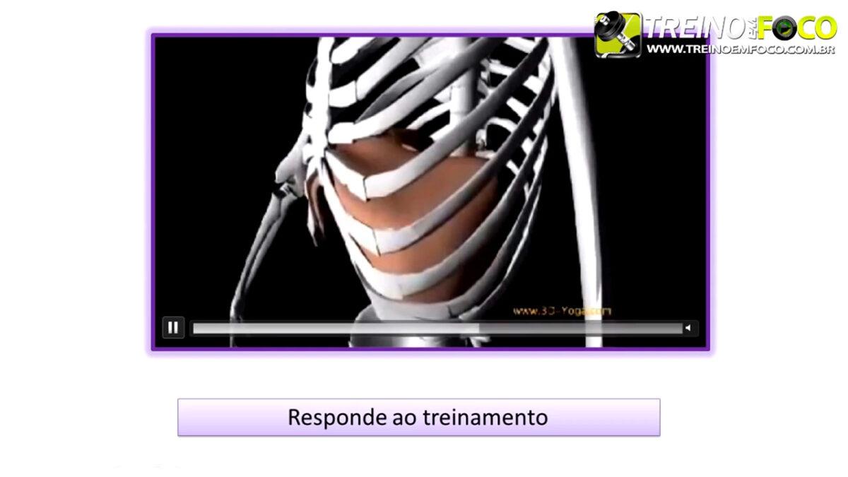 musculo_diafragma_treino_em_foco_musculo_inspiratorio