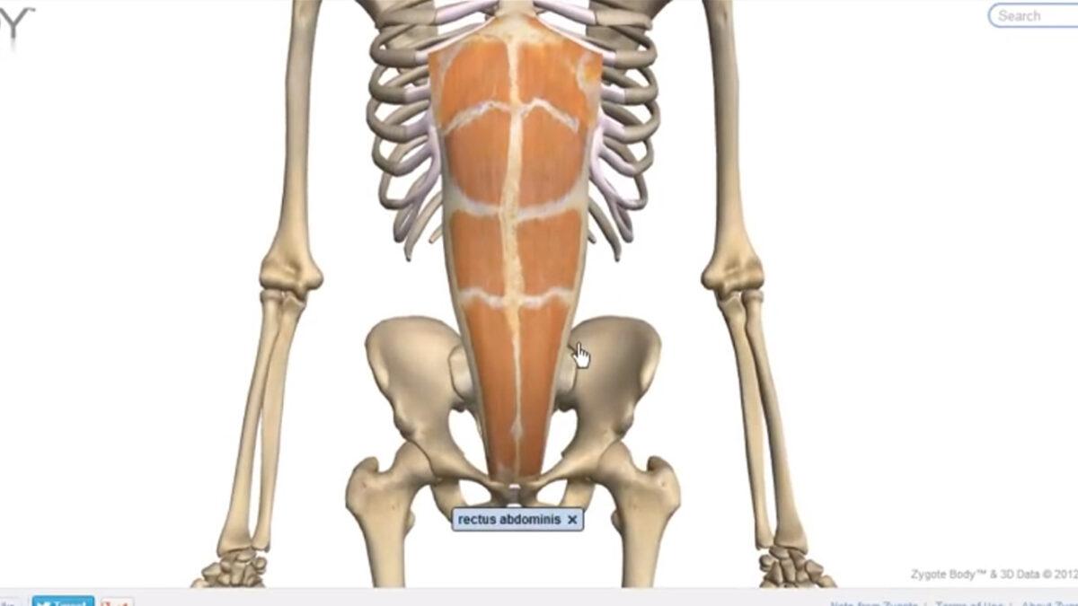 musculos_abdominais_treino_em_foco_flexionamento_anatomia