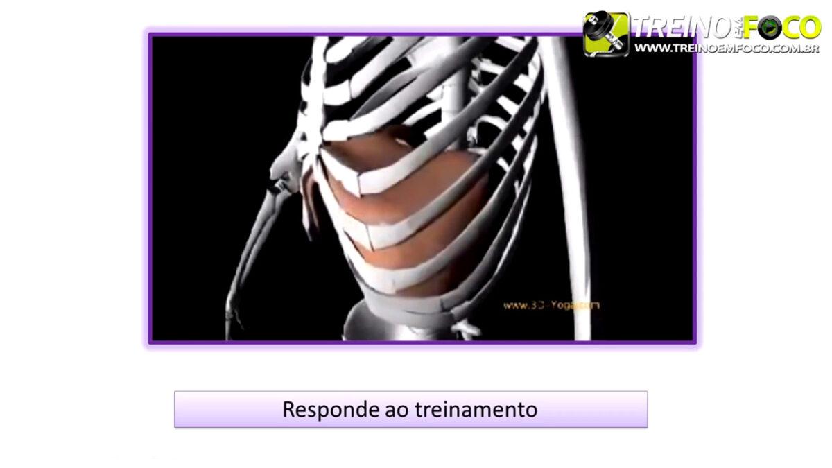 treino_em_foco_musculo_diafragma_inspiratorio_respiracao