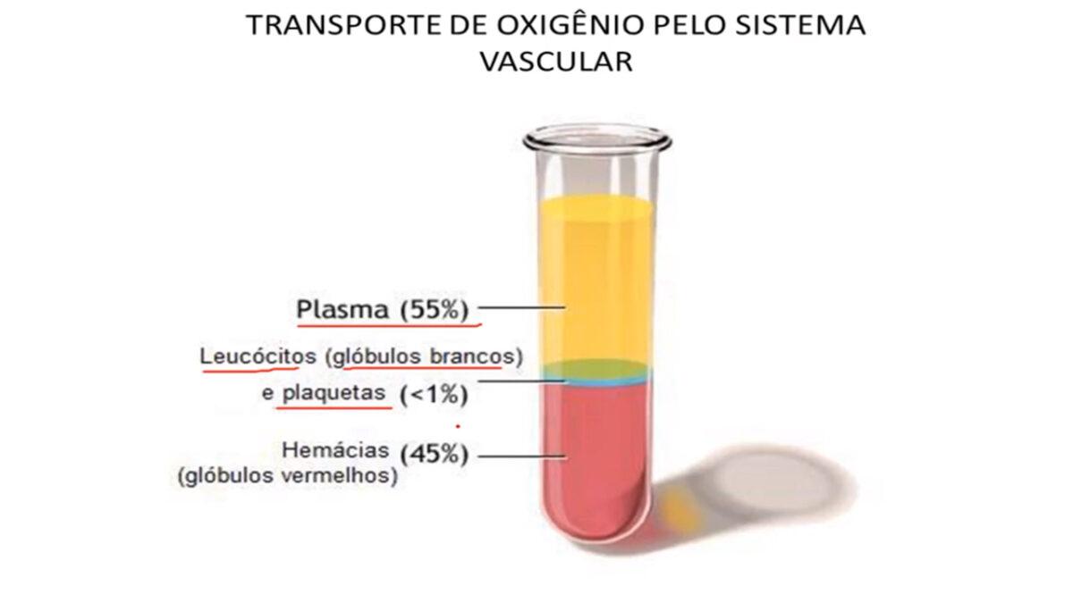 tecido_sanguineo_treino_em_foco_exercicios_aerobios_corrida_oxigenio