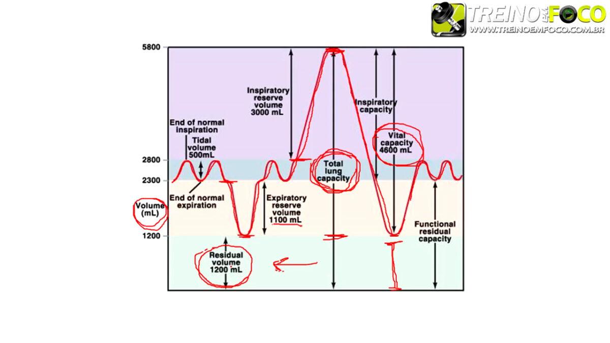 treino_em_foco_volumes_pulmonares_ventilacao_pulmonar_respiracao
