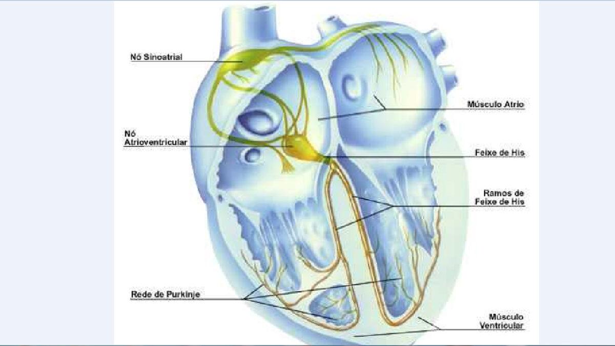 treino_em_foco_controle_cardiovascular_coracao