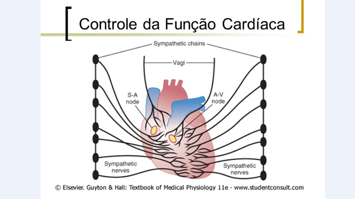treino_em_foco_controle_simpatico_parassimatico_frequencia_cardiaca