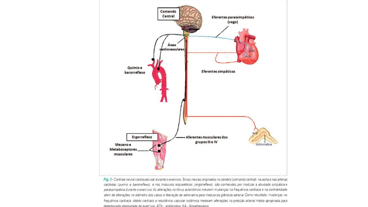 controle_frequencia_cardiaca_treino_em_foco_peso_corporal
