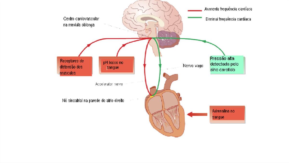 treino_em_foco_controle_quimico_frequencia_cardiaca