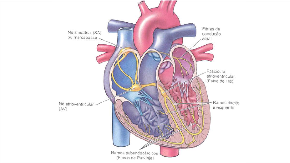 treino_em_foco_peso_corporal_controle_frequencia_cardiaca
