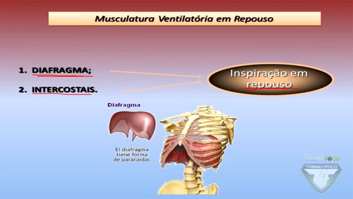 sistema_ventilatório_respiratório_treino_Em_foco