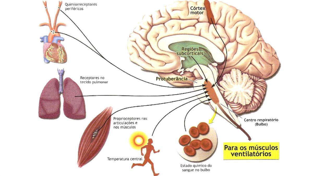 treino_em_foco_controle_respiratório_exercícios_Aeróbios