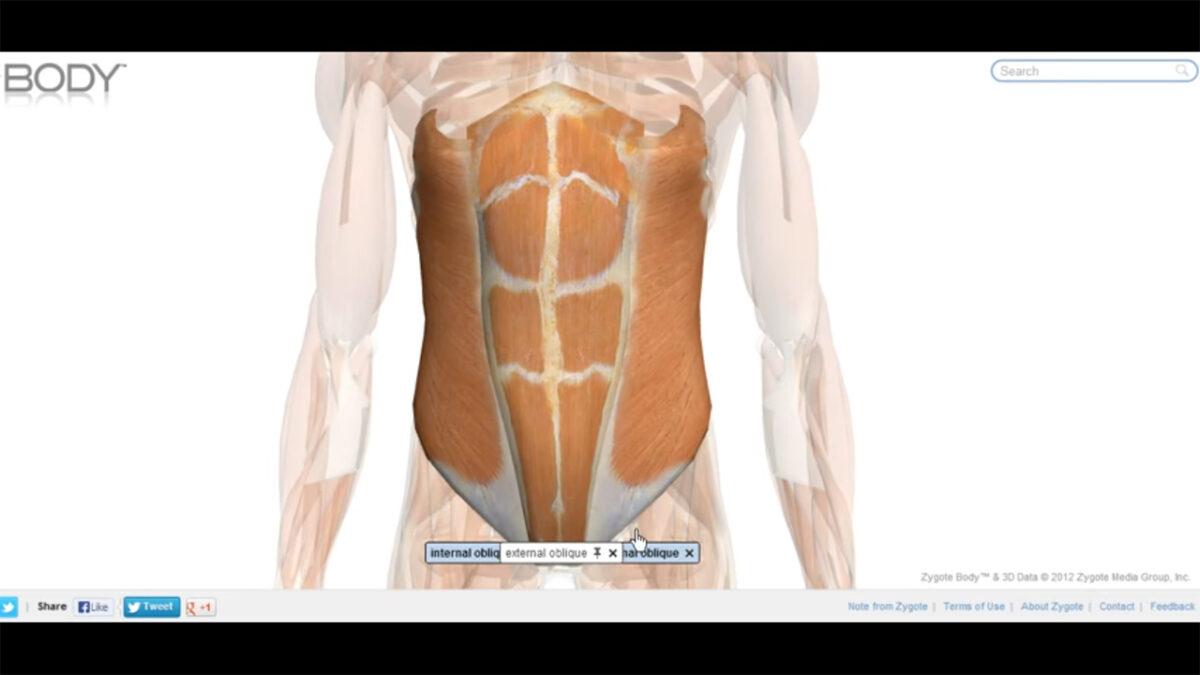 musculatura_abdominal_pelve_treino_em_foco