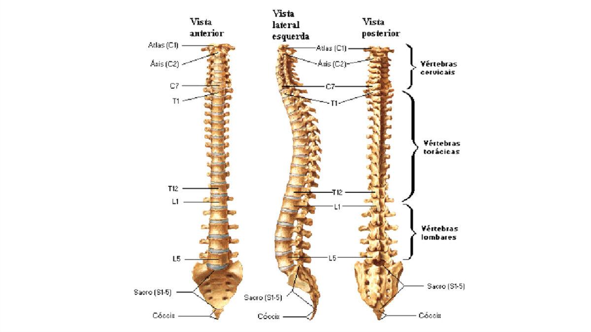 treino_em_foco_coluna_vertebral_exercícios_abdominais