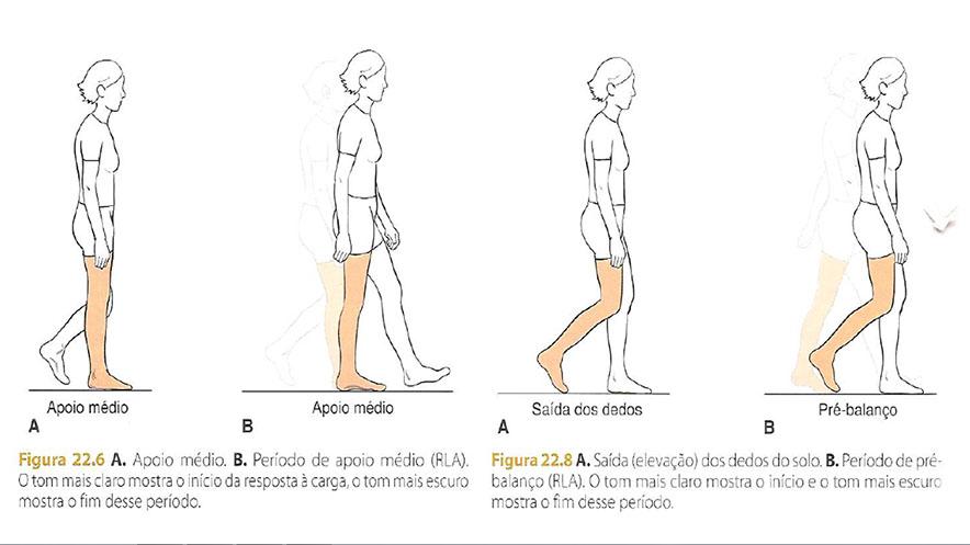ciclo_da_marcha_fase_de_balanço_treino_em_foco