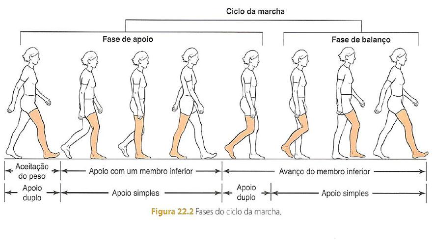 ciclo_da_marcha_treino_em_foco_análise