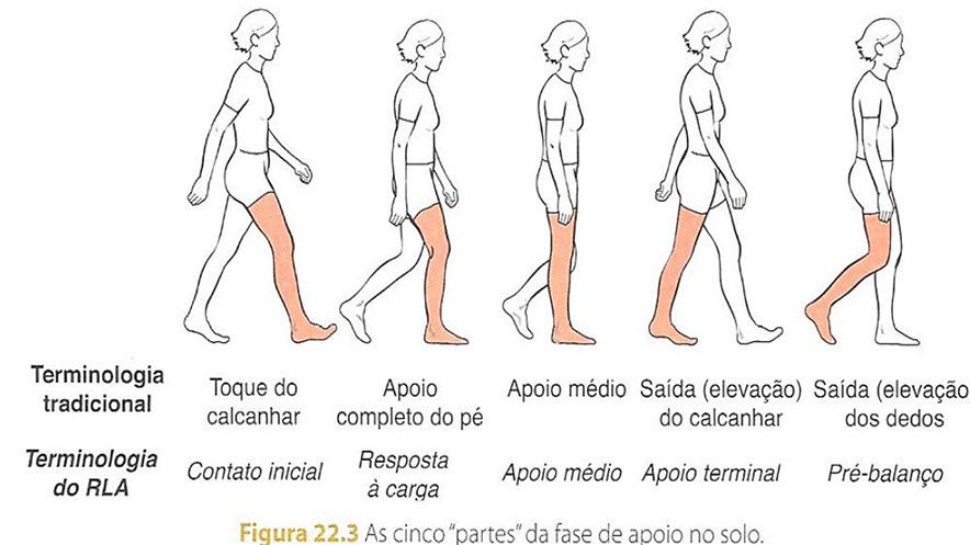 treino_em_foco_análise_ciclo_da_marcha
