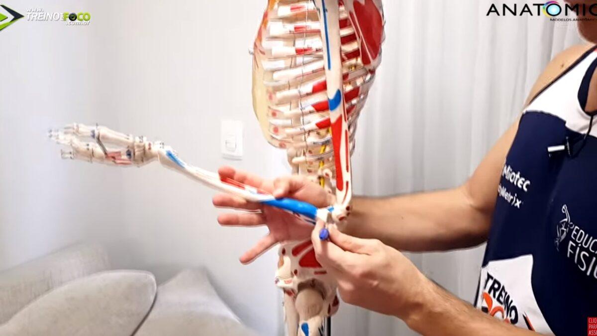 TReino_em_foco_par_antagônico_anatomico_cinesiologia_ anatomia
