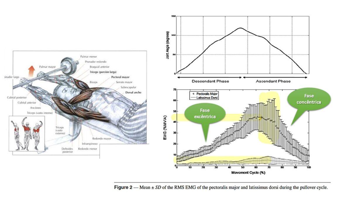 Treino_em_foco_fase_concentrica_ativação_muscular