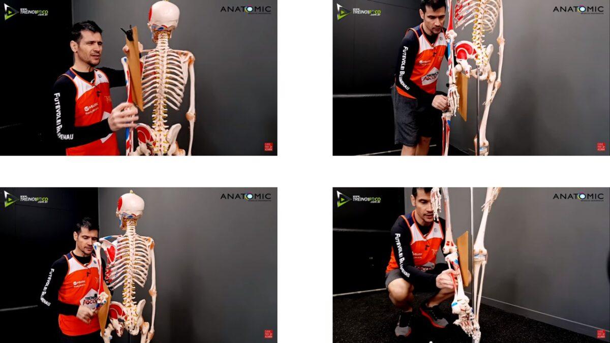 Treino_em_foco_plano_sagital_cinesiologia_anatomia