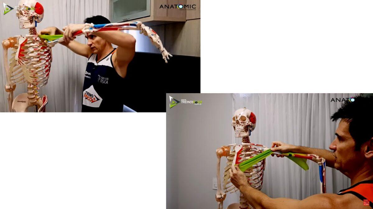 Treino_em_foco_par_anatomico_antagonico_peitoral_deltoide