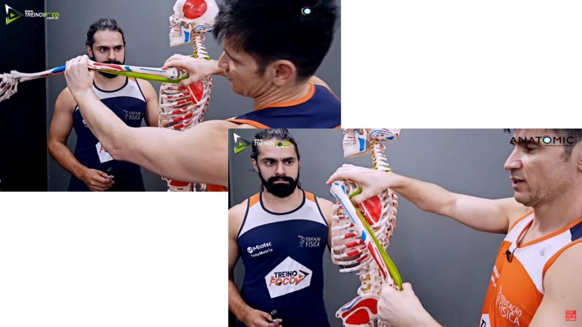 Treino_em_foco_triceps_braquial_cinesiologia